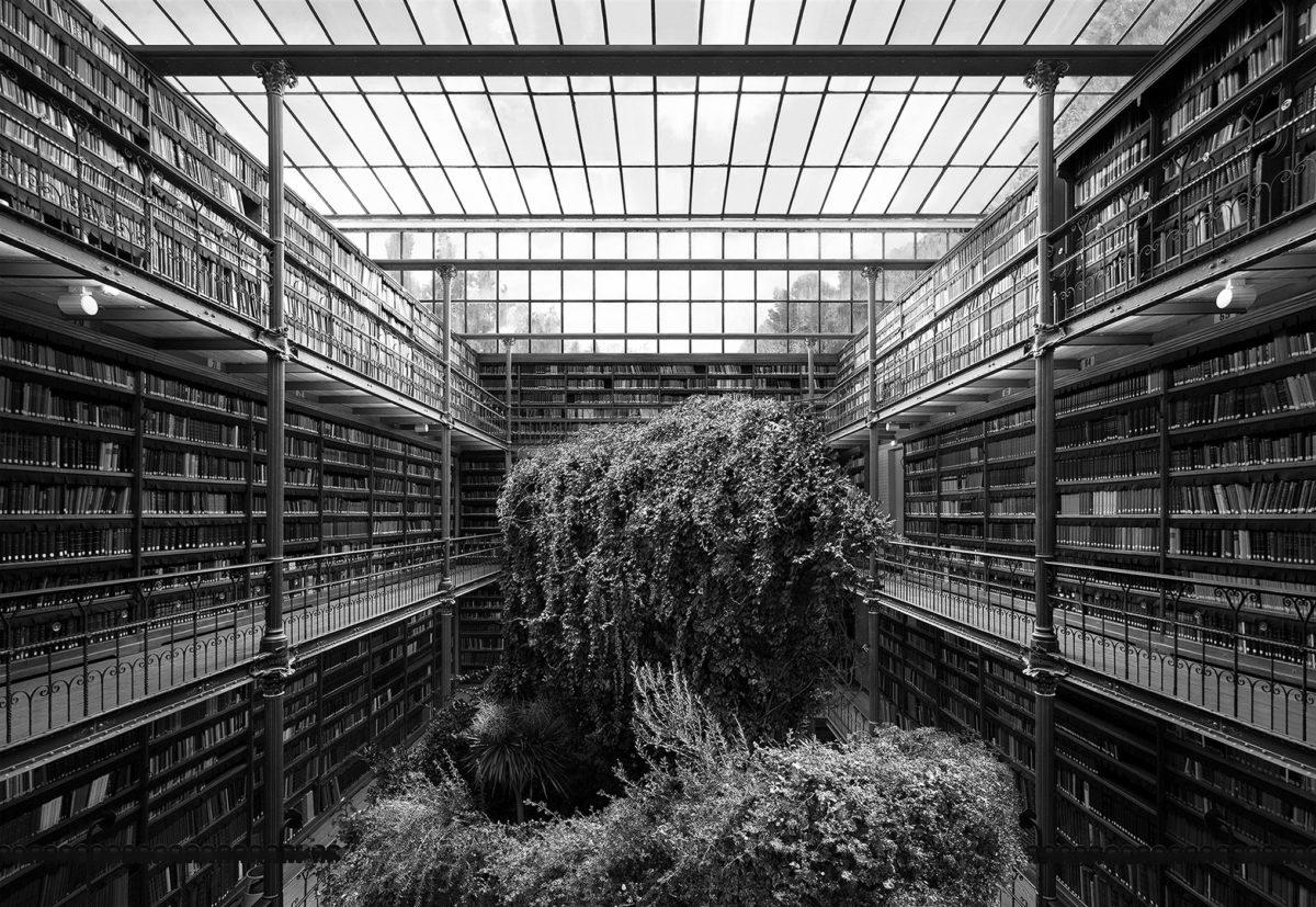 Tanja Deman, Museum Library, 2014