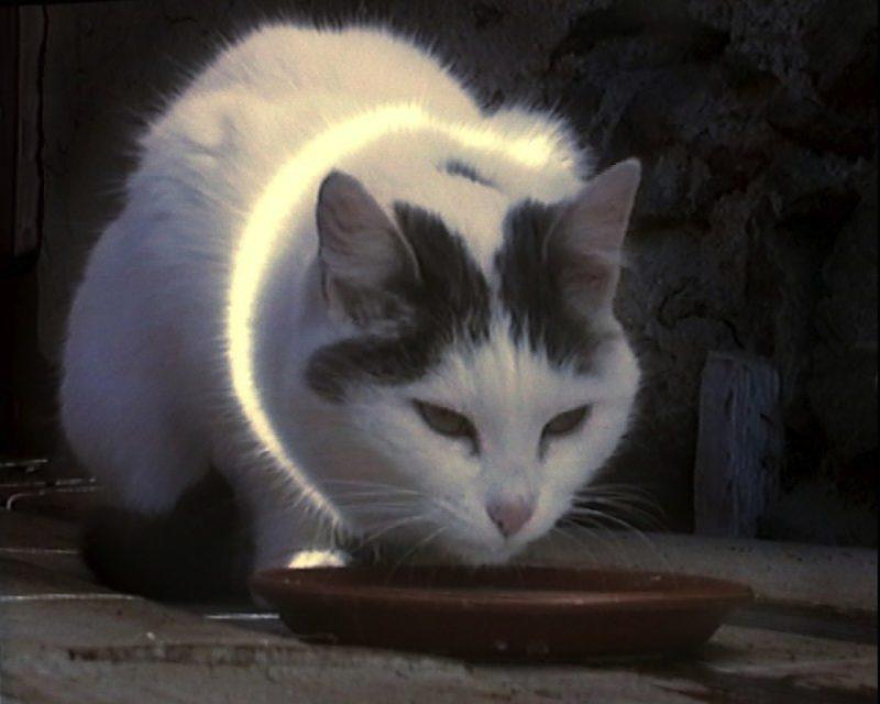 Peter Fischli and David Weiss, Büsi (Kitty), 2001. DVD, 6:30 min. Schätzpreis $ 8.000-12.000