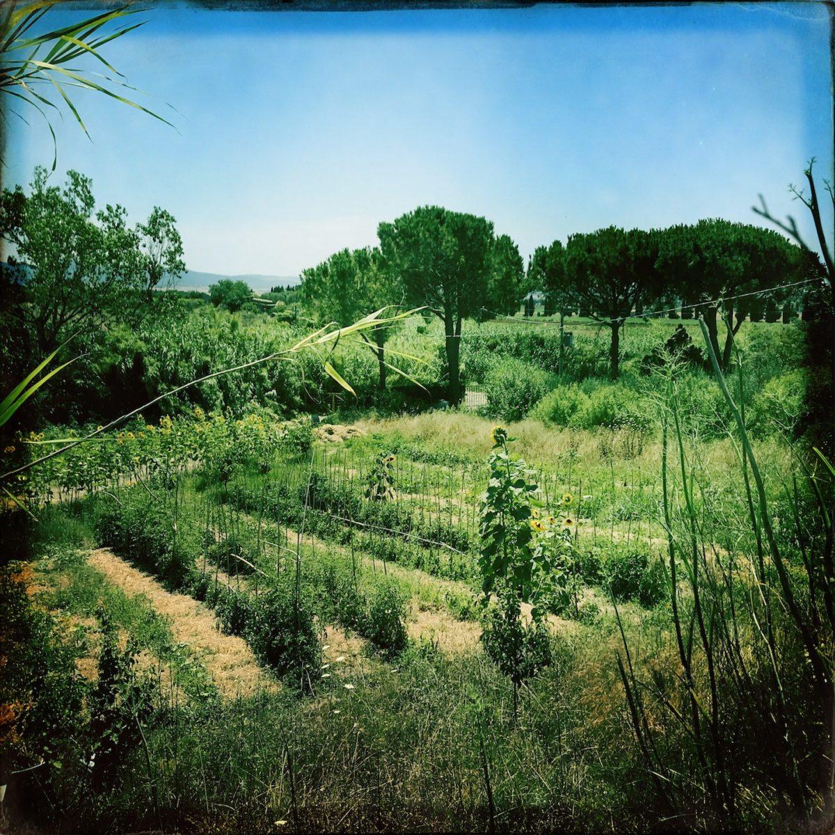 Go Bugs Go Garten in Italien // Edgar Honetschläger